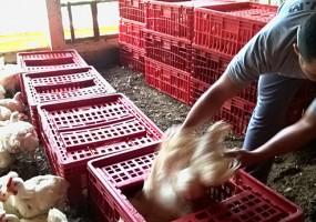 TRT-SC condena frigorífico por uso de trabalho infantil