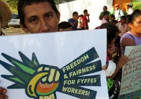 Fyffes monta sindicatos paralelos